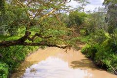 Lövverk över en flod Royaltyfri Fotografi