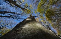 Lövverk av holmen och blå himmel, höst, skog Casentinesi, Tuscan Royaltyfri Bild