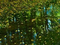 Lövverk för höst för liten vik för naturlandskaplandskap Arkivfoto