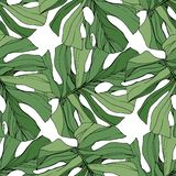 Lövverk för trädgård för växt för vektorgräsplanblad blom- Inristad färgpulverkonst Palm Beach trädsidor Seamless bakgrund mönstr royaltyfri illustrationer