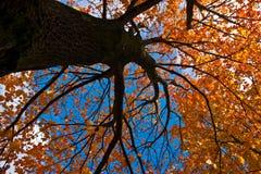 lövverk som ser upp treen Royaltyfri Foto