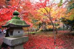 Lövverksäsong i Japan Fotografering för Bildbyråer