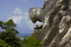 Löwe-Ansicht Stockfoto