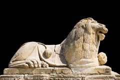 Löwe getrennt auf schwarzem Hintergrund Lizenzfreies Stockbild