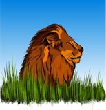 Löwe im Gras Stockfotografie