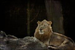 Löwe im Wald stockfotografie