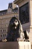 Löwe am Trafalgar-Platz Lizenzfreie Stockfotos