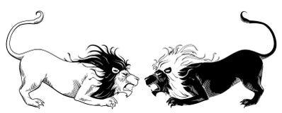 Löwekämpfen Stockfotografie
