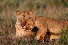 Löwemutter mit Jungem Stockfotografie