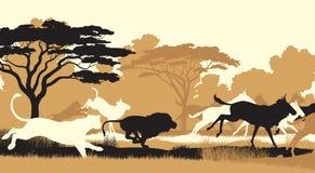 Löwen, die Gnu jagen Stockfoto
