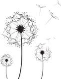Löwenzahn-Blume lizenzfreie abbildung