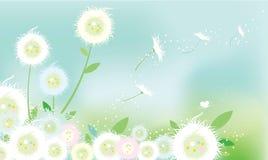 Löwenzahn-Blumen Stockfoto