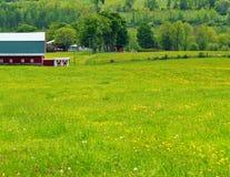Löwenzahn-Felder und rote Scheune stockbilder