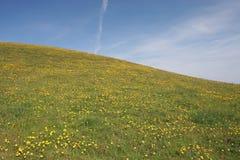 Löwenzahn-Hügel Stockbilder