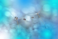 Löwenzahn und Blau Waterdrops Stockbilder