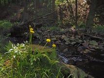 Löwenzahn und Farn mit dem Waldfelsigen Dampf Lizenzfreies Stockfoto