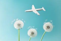 Löwenzahnblumen und weißes Flugzeugschattenbild im blauen Himmel Reise, Sommerferien, Luftfahrt und Flugkonzept stockbilder
