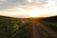 Löwenzahnfeld des Sommersonnenuntergangs lizenzfreie stockfotos