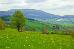 Löwenzahnfelder Stockfoto