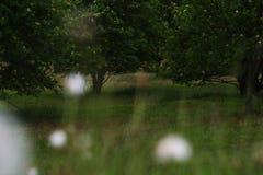 Löwenzahnfelder Stockbild
