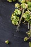 Lúpulo e orelhas verdes da cevada Fotografia de Stock