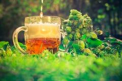 Lúpulos do cone da pinta da cerveja da pinta Imagens de Stock