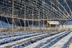 Lúpulos no tempo de inverno Imagem de Stock Royalty Free