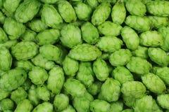 Lúpulos verdes Fotografia de Stock Royalty Free
