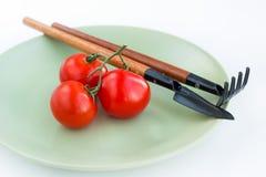 Lüge mit drei Tomaten auf einer Platte Lizenzfreie Stockfotos