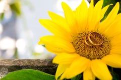 Lüge mit zwei Eheringen auf einer großen Sonnenblume Stockfotos