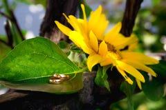 Lüge mit zwei Eheringen auf einer großen Sonnenblume Lizenzfreies Stockbild
