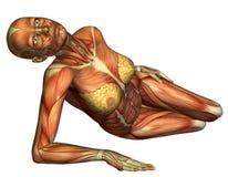 Lügen der weiblichen Karosserie des Muskels Stockfoto