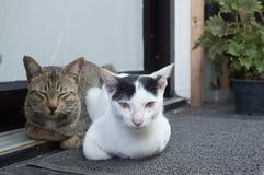 Lügen mit zwei Katzen Lizenzfreies Stockbild