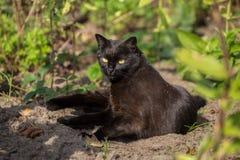 Lügen-Sommertag der schwarzen Katze Lizenzfreie Stockfotos