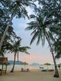 Lügen unter Palmen in Thailand stockbilder