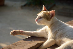 Lügenc$genießen der weißen Katze, Sonnenlicht glättend Lizenzfreie Stockfotos
