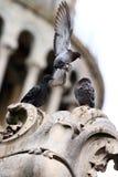 ląduje gołębią statuę Zdjęcie Royalty Free