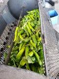 Lągu zielony chile iść w prażalniku fotografia royalty free