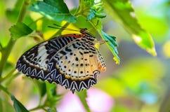 lęgowy motyl oprzędza rzędy Zdjęcie Royalty Free