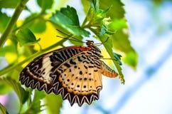 lęgowy motyl oprzędza rzędy zdjęcia royalty free