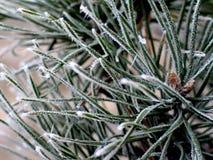 L'⦠de commande de l'hiver Photographie stock libre de droits