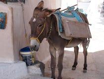 L'âne a attaché à la construction avec l'équipement coloré lumineux image stock