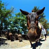 L'âne et ses amis attendent Photographie stock