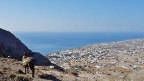 L'âne sur le dessus de la montagne dans Santorini, Grèce image stock