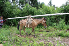 L'âne transporte les marchandises photographie stock