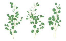 L'échantillon de branches avec des feuilles d'eucalyptus est un dollar en argent Le VE illustration de vecteur