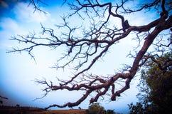 L'éclairage d'un arbre frappe Photographie stock libre de droits