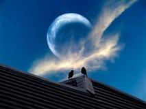 l'éclipse de la lune est un oiseau rare de silhouette de phénomène images stock