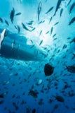 L'école des poissons rayés nagent autour d'un bateau Photos stock