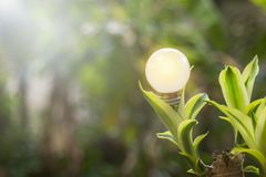 L'écologie et les ampoules saveing d'énergie ont mené avec électrique naturel images stock